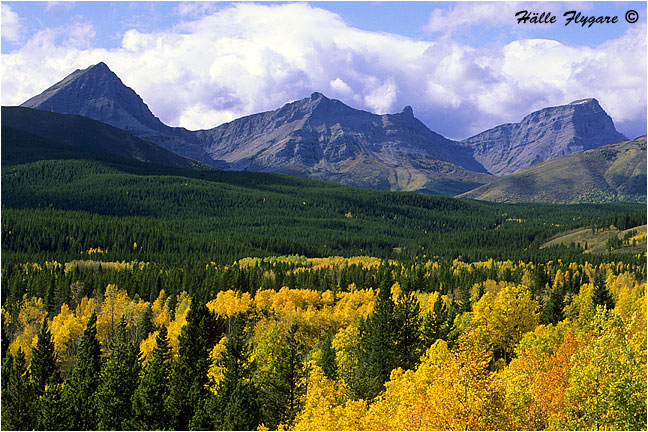 Elk Range and Upper Highwood River Valley  photography by Hälle Flygare