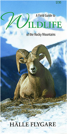 A field guide to Wildlife of the Rocky Mountains by Halle Flygare ©